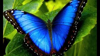 World's Most Beautiful Butterflies - Best documentaries