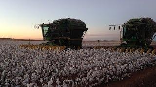 Pork Choppers - Harvest Time! (2013-14 Cotton Harvest)