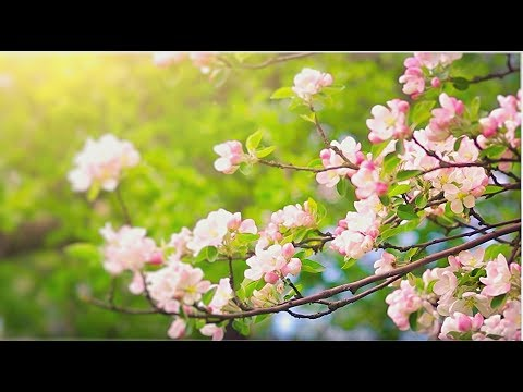 Soothing Flute Music for Meditation. Relaxing Music for Stress relief Yoga Spa Sleep