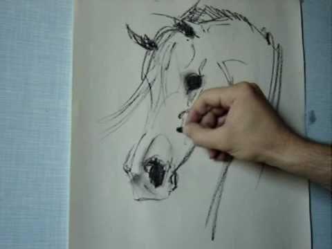 How to draw Arabian horse head Gabriel Tora