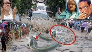 প্রচন্ড বৃষ্টিতে ঢাকার মহাসড়কে শত শত মাছের গড়াগড়ি ! Deshi news24.