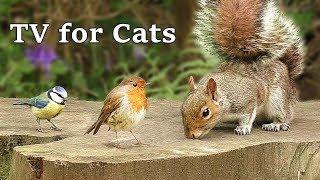 TV for Cats : Birds on Bluebell Log