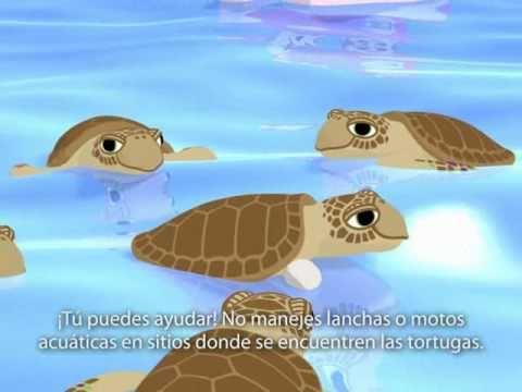 Tortugas Marinas Debemos protegerlas.