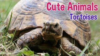 Tortoise Photo Montage With Classical Music