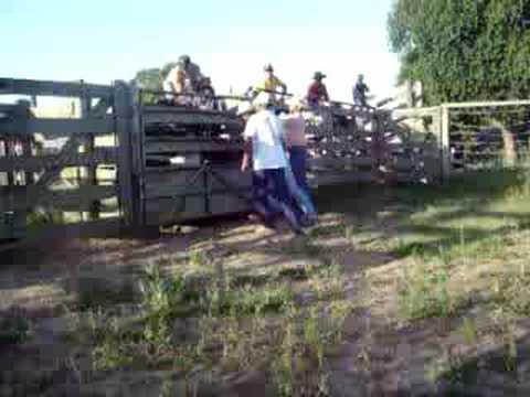 montarias em touros