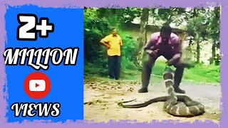 Dangerous King Cobra hunt !