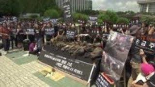 Protestas contra consumo de carne de perro en Seúl