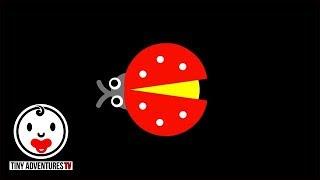 Baby Sensory | Shape World - Ladybug (Infant Visual Stimulation)