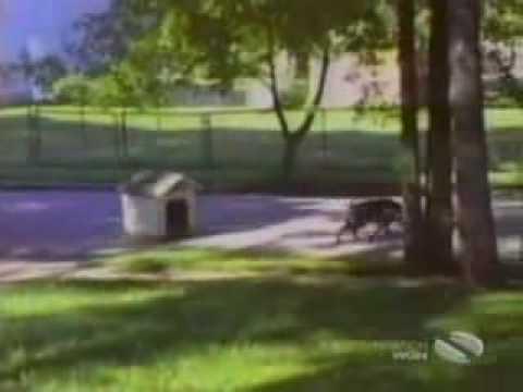 Śmieszne zwierzaki zwierzęta śmieszne filmiki