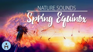 Spring Equinox Song: Relaxing Instrumental Nature Sounds Music, Springtime Ambience Therapy