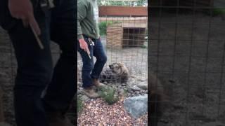 Jordan & The Hyena at Animal Adventure Park, NY