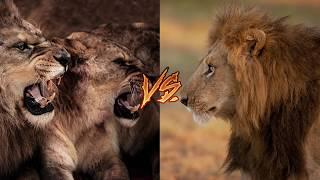 5 Смертельных битв животных.