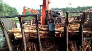 Ngupas kayu akasia Pt. Brl