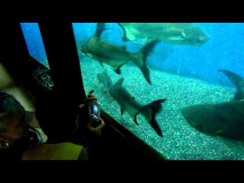 Berkin Yahyaoğlu Darıca Hayvanat Bahçesi nde.Balıklar.