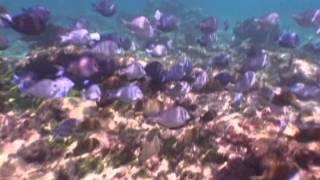 underwater fish cam - ,free video download