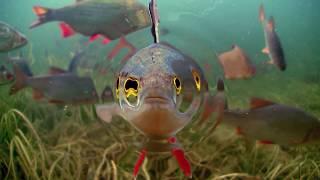 Underwater world of Ireland in HD.