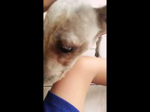 Xxx Mp4 Bermain Bersama Anjing Saya 2 3gp Sex