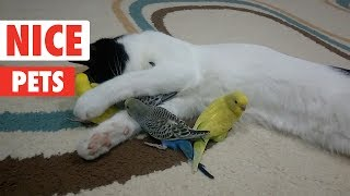 Nice Pets   Funny Pet Video Compilation 2017