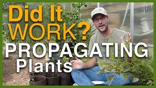 Propagating Plants: Did It Work?