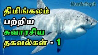 கரை ஒதுங்கி உயிர் விடும் திமிங்கலங்கள் காரணம் தெரியுமா-1 |  Weird facts about whales | TP