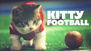 LITTLE BABY KITTENS PLAY FOOTBALL // @ScottDW