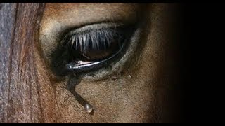 What About Us  ||  Tribute To Abused Horses