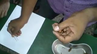 BioLogy Lab Experiment  (cockroach Dissection)