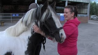 Ponies starved near to death, woman meets the transformed horses she helped to save
