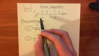Protein Sequencing - Edman Degradation Part 1