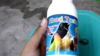 Ebod toxs