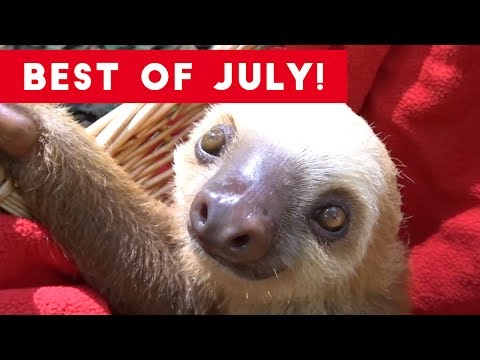 Funniest Pet Reactions & Bloopers of July 2017 Funny Pet Videos