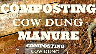 How to make easy organic manure from cow dung|| organic compost || organic fertilizer