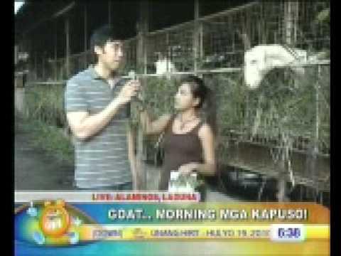 Unang Hirit Goat Morning at Alaminos Goat Farm Part 1
