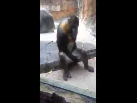Xxx Mp4 Salman Khan Monkey Sex 3gp Sex