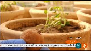 Iran Potato harvest, Fereydan county, Isfahan province برداشت سيب زميني شهرستان فريدن اصفهان ايران