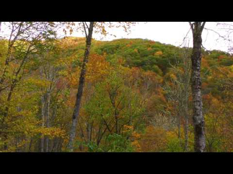Relaxing Fall Leaves Blowing in the Wind in Maggie Valley North Carolina