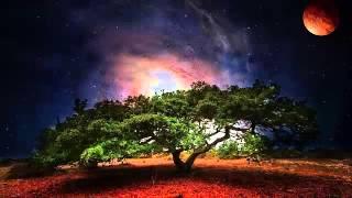 Cosmos | Genadi Tkachenko
