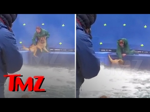 A DOG S PURPOSE TERRIFIED GERMAN SHEPHERD FORCED INTO TURBULENT WATER TMZ