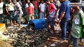 এ কেমন মাছ?    Prothom Alo News