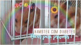 Hamster com diabetes? Dicas para prevenir isso :)