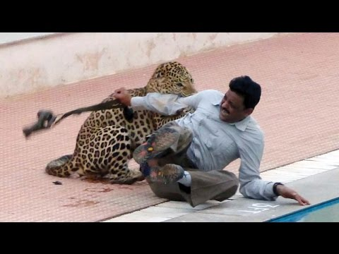 Xxx Mp4 Indian Leopard Injures Six In Bangalore School 3gp Sex