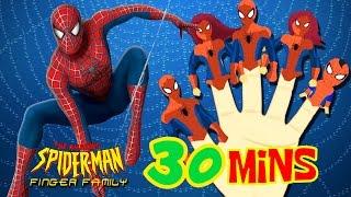 FINGER FAMILY SPIDERMAN | Superheroes Finger Family Songs SUPERMAN, BATMAN, HULK, IRON MAN