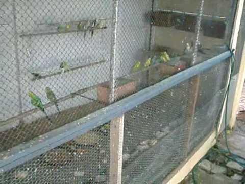 Visão Geral dos Viveiros e Gaiolas Pássaros do Portuga