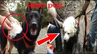 Rescue Dog Becomes A Hero After Locating Another Missing Pup Trapped Deep In Mud For Days