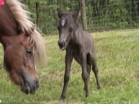 horse lovers video