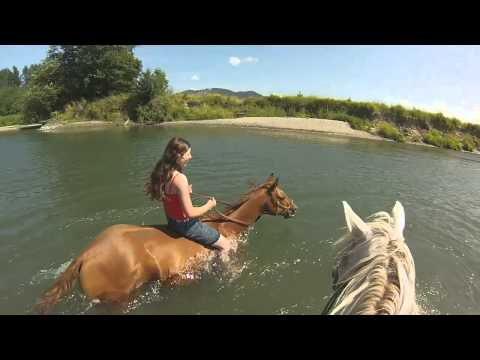 Swimming with horses in the Stillaguamish August 2014