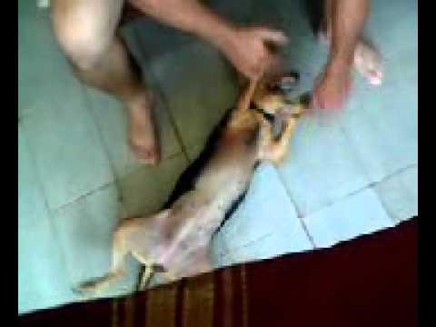 O homem e a Cadela