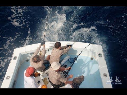 чем ловят рыбу в океане