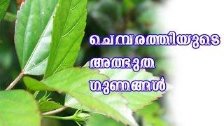 ചെമ്പരത്തിയുടെ അത്ഭുത ഗുണങ്ങൾ/Malayalam Health tips