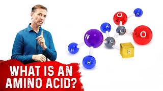 What Is An Amino Acid?